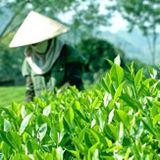 Vietnamský zelený čaj sypaný THAI NGUYEN 500g
